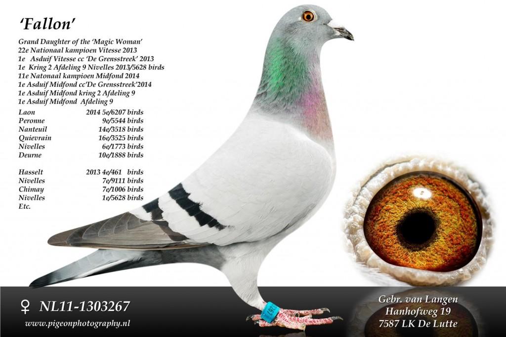 NL11-1303267