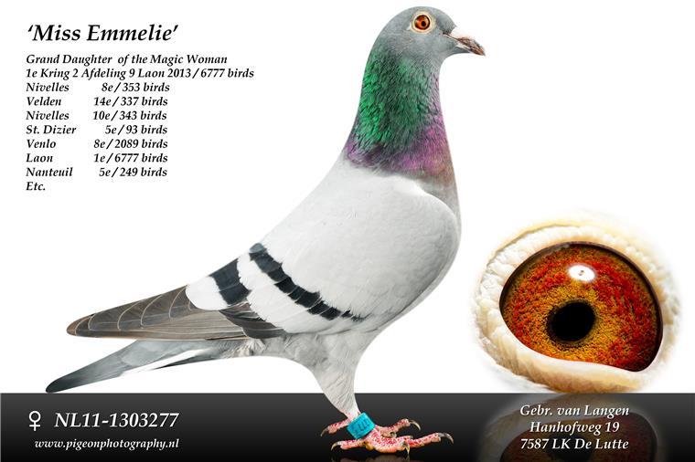 NL11-1303277