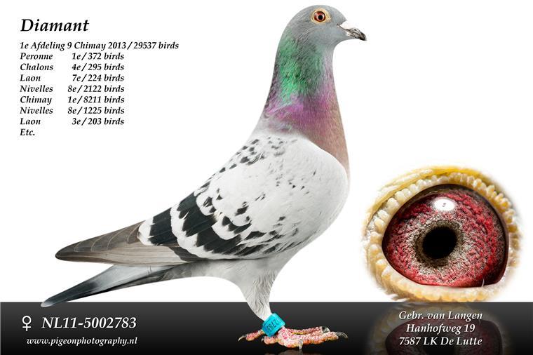 NL11-5002783